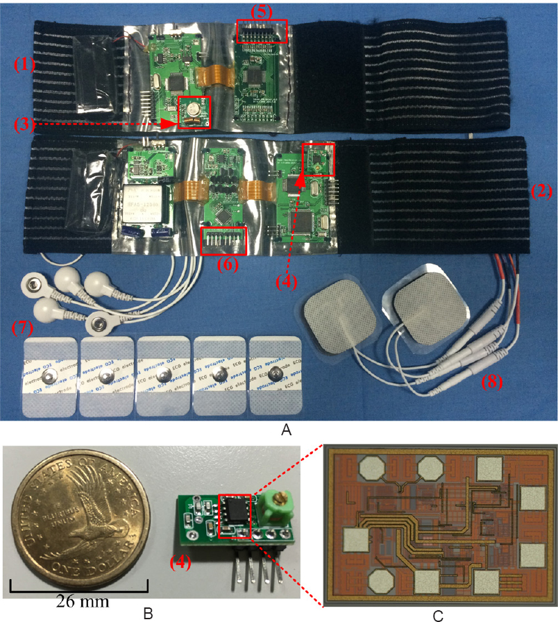 Figure 3: Prototype wearable EMG-bridge system.(A) The prototype wearable EMG-bridge system. (B) The radio frequency receiver board. (C) The self-designed integrated super-regenerative receiver chip in 0.35-mm complementary metal oxide semiconductor. (1) Transmitting wearable band; (2) receiving wearable band; (3) on-off keying circuit (radio frequency transmitter); (4) super-regenerative receiver circuit (radio frequency receiver); (5) interface between sEMG electrodes and sEMG signal detecting circuit; (6) interface between functional electrical stimulation circuit and gelled stimulation electrodes; (7) surface Ag/AgCl electrocardiogram electrodes for sEMG signal acquisitions; (8) gelled stimulation electrodes (4 × 4 cm<sup>2</sup>). sEMG: Surface electromyography.
