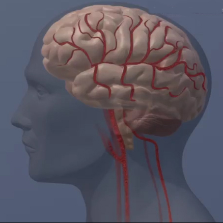 [WEB SITE] Transcranial electrical stimulation shows promise for treating mild traumatic brain injury